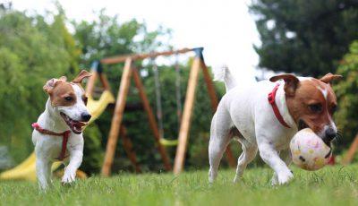 honden spelen in de tuin