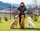hond op vakantie lust of last