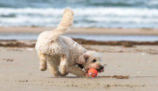 hondenvakantie aan zee